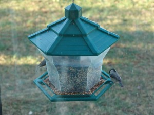 Lessons from a Birdfeeder